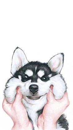 Lovely Siberian Husky hard Case Cover For iPhone 6 Samsung Huawei Sony LG. For iPhone 7 For Samsung Galaxy 2017 For Huawei Lite For Huawei Honor Pro. For iPhone 8 For Samsung Galaxy Plus 2018 For Huawei For Huawei Honor Tumblr Wallpaper, Screen Wallpaper, Wallpaper Backgrounds, Wallpaper Telephone, Animals And Pets, Cute Animals, Animal Wallpaper, Dog Wallpaper Iphone, Cute Dog Wallpaper