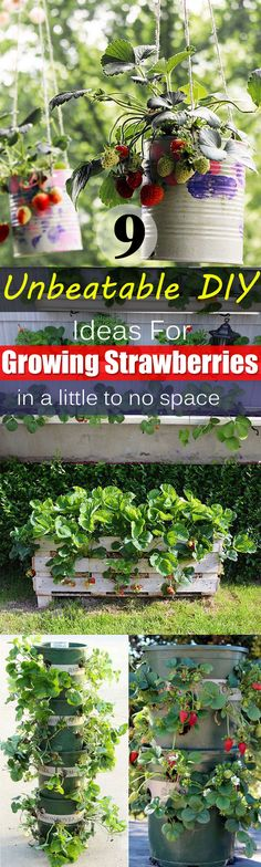 Want to grow so many strawberries in so little space? Try one of these vertical DIY ideas for growing strawberries!