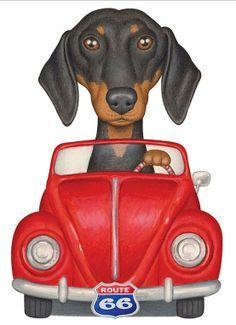 Dachshund on Pinterest | Dachshund Puppies, Weiner Dogs and Wiener ...