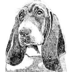 Ros Shiers - Wilfred the Bassett Hound Print (295 NOK) ❤ liked on Polyvore featuring home, home decor, wall art, white wall art, white home decor and unframed wall art