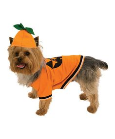 Take a look at this Pumpkin Pet Costume by Rubie's on #zulily today! $9!!