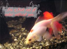 Fresh Fish Supplies All Year Round. Fish Quotes, Pets, Animals, Animales, Animaux, Animal, Animais, Animals And Pets