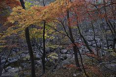 Soraksan National Park in various colors.  http://www.mattmacdonaldphoto.com