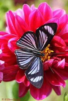 Beautiful Butterflies ❤