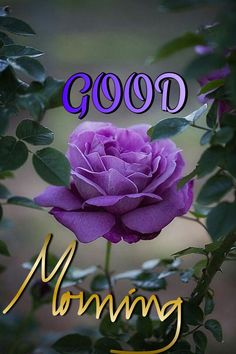 In today's post, we are presenting good morning msg. If you are searching for good morning msg you are welcome to our website. Good Morning Happy Saturday, Cute Good Morning, Good Morning Flowers, Good Morning Messages, Good Morning Wishes, Morning Quotes, Saturday Quotes, Morning Blessings, Night Quotes