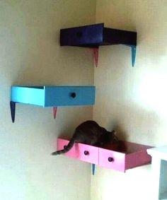 SONHANDO ALTO    instale gavetas nas paredes, acomode almofadas nos interiores e tenha novas e modernas camas para seus gatos! #petbed #diy #petdecor #Tecnisa Foto: JoiadeCasa
