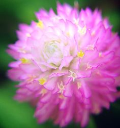 GIZMON MACRO LENS/FLOWER Photographs by SatoRichman