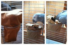 Take a paper lunch bag and wrap the food dish in it. A really simple way to add some complexity to your parrot's day!