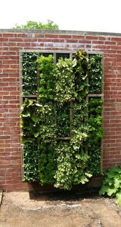 Vertical garden..