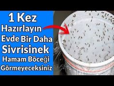 Bunu evinize koyarsanız, 1 saat sonra ASLA Sivrisinek veya Hamamböceği görmezsiniz - YouTube Diy Cleaning Products, Cleaning Hacks, Insecticide, Soy Products, Toilet Cleaning, Baby Knitting Patterns, Things To Buy, Home Remedies, Health Tips