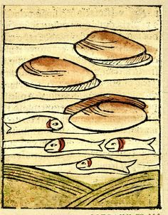 """from """"Ortus Sanitatis"""" printed by Jacob Meydenbach, Mainz. 1491 Woodcut with hand-colouring"""