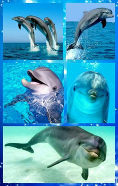 Dolphins are awesome and graceful