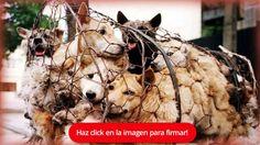 Detener el Yulin Festival FIRMA Y COMPARTE ESTA PETICIÓN AHORA!