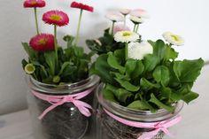 Bellis im Weck-Glas Beautiful Flower Arrangements, Beautiful Flowers, Weck Jars, Plant Decor, Happy Easter, Earthy, Diy Crafts, Spring, Creative