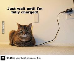 Battery cat