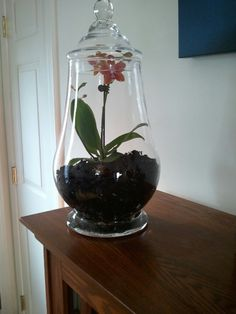 mini phalaenopsis orchids will brighten up a terrarium part 2 of 2 centerpieces pinterest. Black Bedroom Furniture Sets. Home Design Ideas