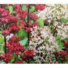 Nasiona Niespotykanych i Ciekawych Roślin - Sklep Świat Kwiatów   Dostawa gratis! Plants, Flora, Plant