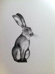 #hare #illustration #art #rabbit #drawing