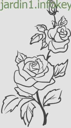 Roses Flowers Vine Leaves Bud Open Clip Art Black And White Dessin Colombe Dessin De Fleur Dessin De Roses