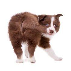De certeza que já pegou o seu cachorro mordendo o rabo. Descubra por que ele faz isso no site! #cachorros #cães #animais #animals #dogs