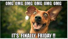 The excited dog running around the office. The funny noises the two electricians made. Watching three episodes of Kardashians that I hadn't seen before. Today Is Friday, Finally Friday, Happy Friday, Friday Fun, Happy Tuesday, Excited Dog, Stress, Pets For Sale, Frases Humor
