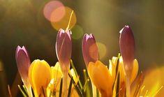 POSTUL nu este înfricoșător pentru noi, ci pentru diavoli – Sfântul Ioan Gură de Aur Plants, Plant, Planets