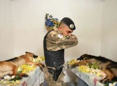 bless their heart. Many people remember a fallen soldier as a person in uniform. Sometimes that soldier is the four legged friend who saved your life. This is a sad but beautiful picture of pure respect for 2 fallen heroes. Military Working Dogs, Military Dogs, Police Dogs, Military Police, Police Officer, War Dogs, Fallen Heroes, Fallen Soldiers, Mundo Animal