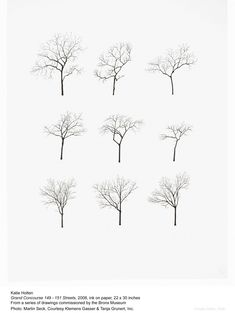 bomen illustratie photoshop silhouet