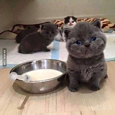 Who will feed me? #9gag by 9gag