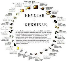 germinación