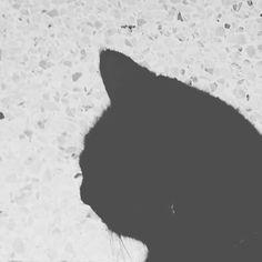 Black cat on white... #cat #blackandwhite #baw #agadir #maroc #followforfollow #ig_morocco