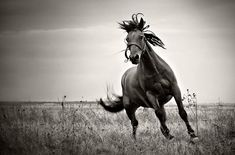 32 Beautiful Horse Photography (1)