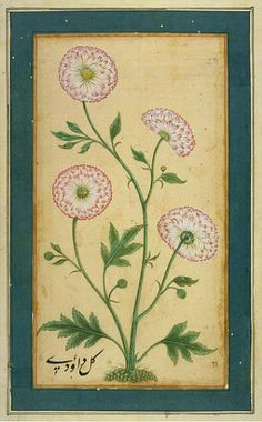 Unknown (India) - Flowering Plant - 18th century