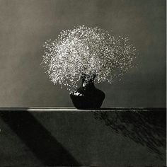 Baby's Breath by Robert Mapplethorpe