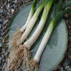 The Versatile Onion Family - lots of useful info on growing onions, garlic, leeks, ramps, shallots and chives