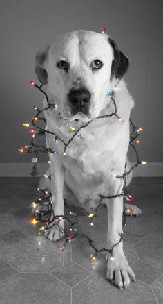 Cani e festività: scelte consapevoli e responsabili  http://www.almonature.eu/almoblog/viva-il-cane/cani-e-festivita-scelte-consapevoli-e-responsabili/