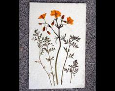 Flores prensadas secas naturales, sueltas sin pegar. Llevan un tratamiento especial para conservar y fijar los colores.  Terbotanic les ofrece un sobre de 2 pensamientos mini con hojas, prensados en tonos azules. Las flores son 100% naturales y miden aproximadamente 3cm de ancho. Pueden utilizarse para embellecer álbumes de recortes, tarjetas de felicitación, velas, arte enmarcado, joyería, muebles, invitaciones de boda... usa tu imaginación.  ¿Interesado en plantas y flores naturales…