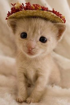 kittens are just the cutest! So fragile, vulnerable, sweet!