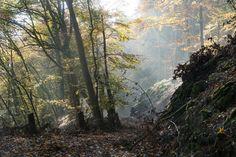 'Durch den herbstlichen Wald im Wolfsgraben' von Ronald Nickel bei artflakes.com als Poster oder Kunstdruck $6.48