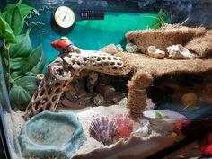 "I like to call this the ""Coco-Cabana Hilton Crabitat."
