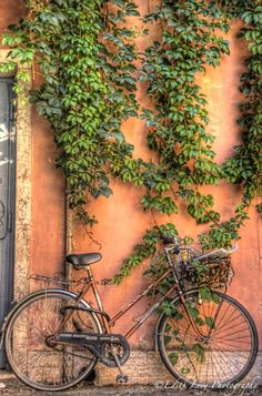 Bicycle in Rome by Edith Levy Photography - I don't know why I love the terracotta colour of the wall so much but it gives me a feeling that I would be so safe protected by this wall