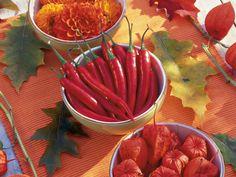 Herbstblumen: Finale in leuchtenden Tönen - dahlien-chilis-lampionblumen-in-schaelchen-800-6002