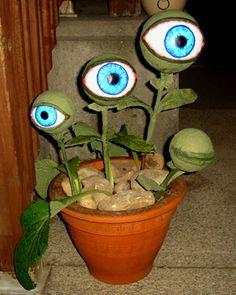 Eyeball plant
