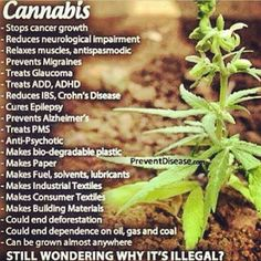 Fast growing & easy to cultivate, Hemp has an estimated 25,000 uses, yet our Governments deny us what is essentially a 'Herb'