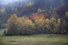 Che cosa c'è di più bello che passeggiare e osservare i colori autunnali dei boschi di #Cartosio #alto #Monferrato #Piemonte Italia