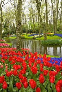The tulip festival at the Keukenhof Gardens in Amsterdam