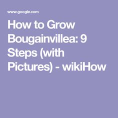 How to Grow Bougainvillea: 9 Steps (with Pictures) - wikiHow