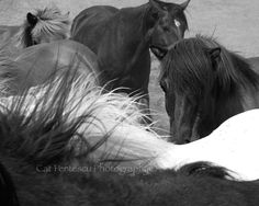 Nature Wildlife Photography Equine Photography Horses - Flowing Manes. Nature and Wildlife Photography by Cat Pentescu by ImagesByCat on Etsy