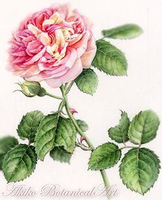 rose-2015  ⇒http://botanical.sakura.ne.jp/Gallery.html