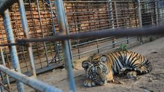 Increase the space for animals in zoos